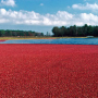 wisconsin_cranberry-bog_with-logo_800x330